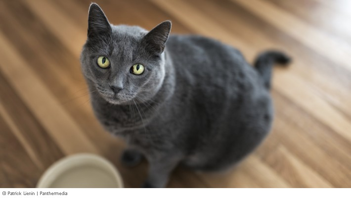 Haltung Von Katzen In Der Mietwohnung Erlaubt