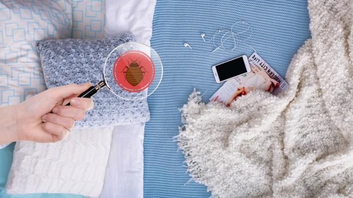 Bettwanzen In Der Wohnung Muss Der Mieter Meist Selbst Beseitigen